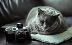 Обои лежит, фотоаппарат, кошак, котяра