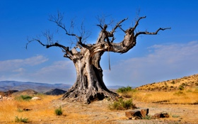 Картинка дерево, пустыня, Природа, коряга