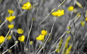Обои цветы, природа, цвет