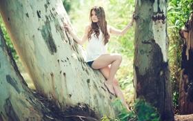 Картинка девушка, дерево, шорты, ножки, красивая