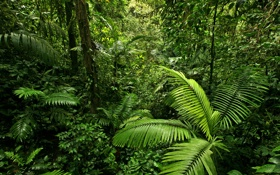 Обои зелень, лес, листья, деревья, ветки, тропики, джунгли