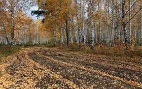 Обои лес, осень, деревья, дорога