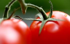 Картинка макро, овощи, помидоры