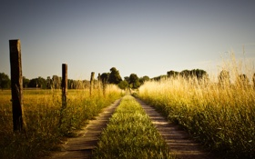 Обои дорога, трава, природа, забор