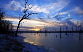 Обои небо, ветки, природа, озеро