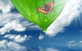 Обои капли, облака, небо, солнце, бабочка, вода, природа