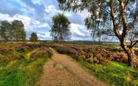 Картинка пейзаж, дорога, лето, природа, поле, дерево