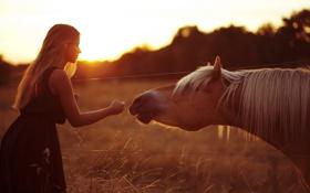 Обои девушка, свет, конь, настроение