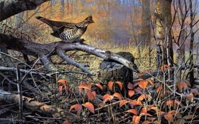 Обои осень, деревья, птица, сухие, живопись, осенний лес, валежник