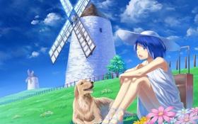 Обои лето, небо, свобода, тепло, отдых, голубое, собака