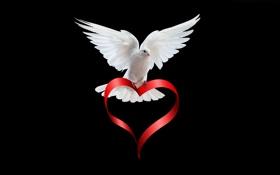 Картинка сердце, птица, лента, голубь