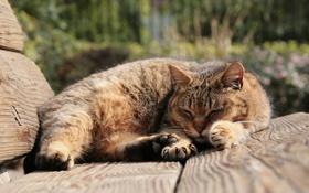 Обои кот, сон, лавочка, коричневый, улича