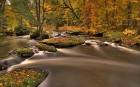 Картинка осень, лес, листья, река, ручей, Природа