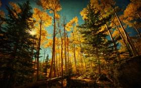 Обои лес, осень, небо, деревья, камни