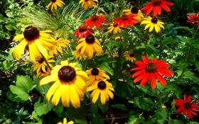 Картинка листья, эхинацея, лепестки, сад, природа