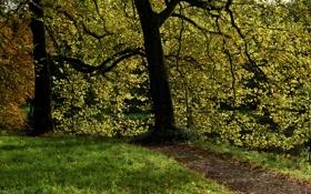 Обои трава, листья, деревья, ветки, пруд, парк, Нидерланды