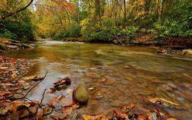 Обои осень, поток, water, stream, вода, waterfall, листья
