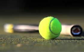 Обои фон, спорт, мяч