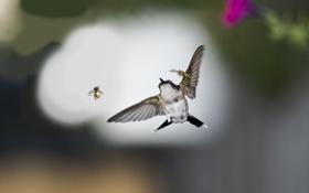 Обои насекомые, птица, колибри, пчелы