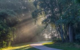 Картинка лес, солнце, лучи, деревья, дорожка
