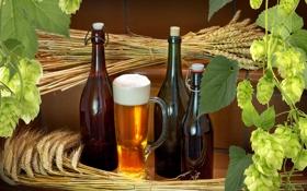 Картинка пшеница, пиво, бокалы, бутылки, хмель
