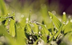 Обои трава, капли, макро, свет, роса, игра