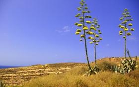 Обои цветок, небо, трава, скалы, растение, Мальта, Двейра