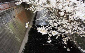 Картинка весна, ветки, цветение, сакура, канал, цветы