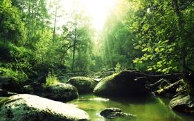 Обои лес, река, Природа, Pyatkov_Denis