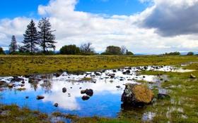 Обои небо, трава, облака, деревья, отражение, камень, лужа