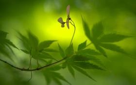 Обои листья, макро, цветы, природа, ветка