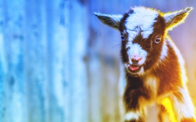 Картинка природа, фон, goats