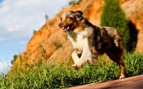 Картинка друг, собака, бег