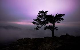 Картинка небо, свет, пейзаж, горы, природа, туман, дерево
