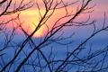 Картинка солнце, ветви, Закат, вечер