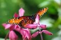 Картинка бабочка, Цветы, блики, розовые