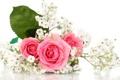 Картинка цветы, розы, букет, розовые розы