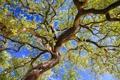 Картинка лето, небо, листья, ветки, природа, дерево