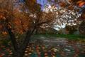 Картинка осень, небо, листья, деревья, горы, озеро, коллаж