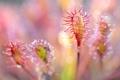 Картинка капли, цветок, экзотика, растение, роса