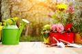 Картинка цветы, лейка, цветение, садовый инвентарь