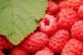 Картинка ягода, макро, лист, малина, вкуснятина