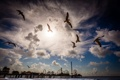 Картинка небо, пейзаж, птицы, тучи, природа, чайки, пирс