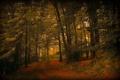 Картинка дорога, осень, лес, природа, листва