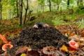 Картинка лес, листья, грибы, нора, крот
