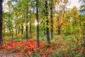 Картинка осень, лес, трава, листья, солнце, свет, деревья