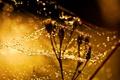Картинка капли, макро, свет, цветы, роса, блики, паутина