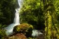 Картинка США, лес, зелень, Oregon, мох, деревья, Bridal Veil Falls