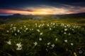 Картинка лето, цветы, горы, Франция, утро, Альпы, Июнь