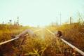 Картинка дорога, лето, девушка